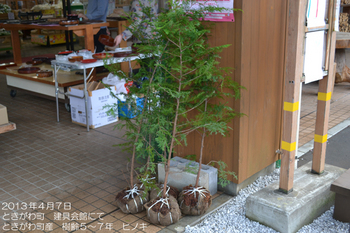 hinoki-nae-01.jpg