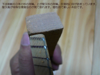 yakusugi05.jpg
